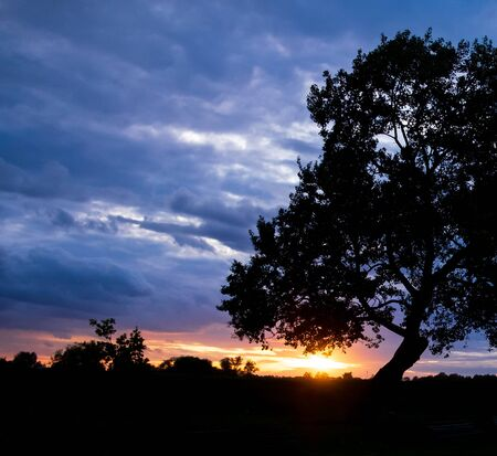 tree on a background of blue sky and sunset 版權商用圖片 - 130145142