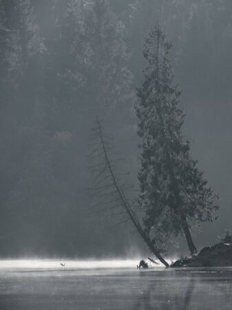 beautiful early morning with fog on a lake in a forest 版權商用圖片