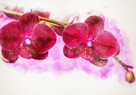 beautiful blooming purple orchid on a lilac background