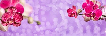 beautiful blooming purple orchids on a lilac background with bokeh