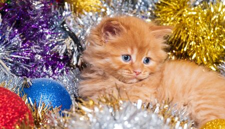 beautiful little kitten with blue eyes and christmas balls Stock Photo