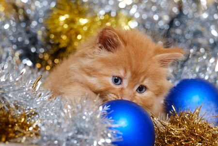 beautiful little kitten with blue eyes and christmas balls 版權商用圖片