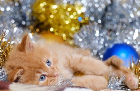 beautiful little kitten with blue eyes and shiny tinsel