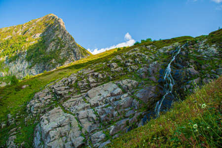 beautiful stream with stones overgrown with grass in the mountains Stock Photo