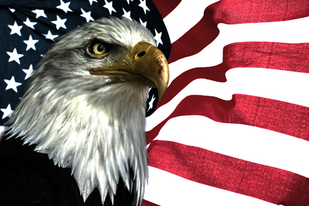 American Eagle National Symbol For Usa East Eagle On The American