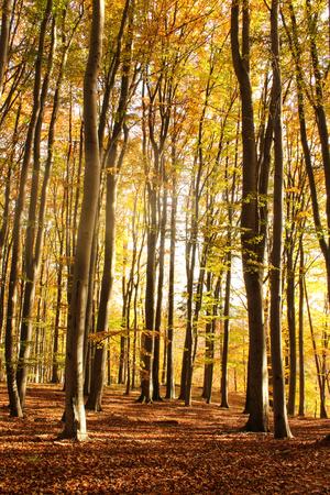 Romantic late autumn nature captured in the morning sun. Stock Photo