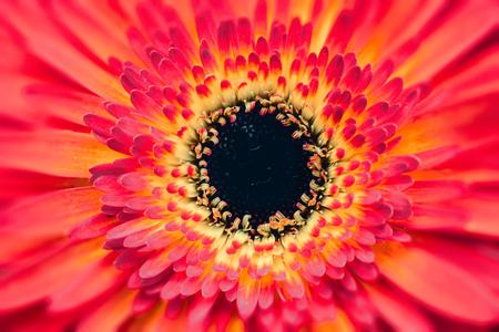 Big flower center pink spring flower in bloosom stock photo big flower center pink spring flower in bloosom stock photo 101516986 mightylinksfo