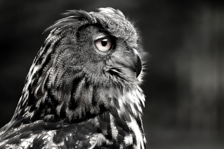 Owls are birds from the order Strigiformes, which includes about 200 species of mostly solitary and nocturnal birds. Owls hunt mostly small mammals, insects, and other birds. Photo of the animal world 스톡 콘텐츠