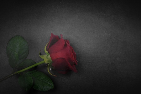 Red rose with black and white shine and smoke effect. Red rose for greeting card.