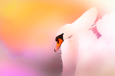Swan in rainbow colours. Trashy picture with swan.  Picture for decoration. Stock fotó