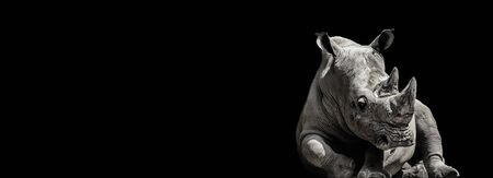 Rhino on the black. Pose rhino for wallpaper. Monochrome portrait. Photo with place for your text.