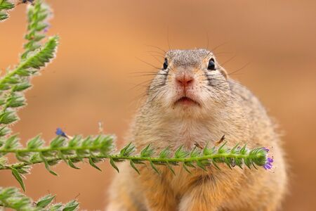 Detail portrait adult rodent in wild nature with plant.