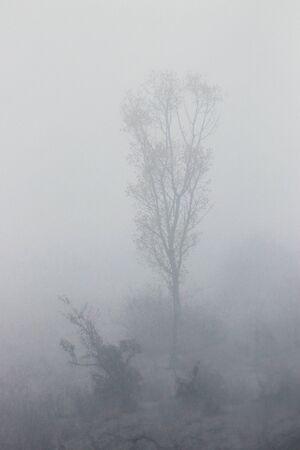 Foto aus der Ebene. Baum im Nebel.