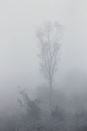 Photo from the plains. Tree in fog. Standard-Bild