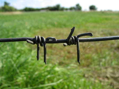 iron defense: barbed wire Stock Photo