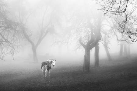 Looking for a horse? Come, ride me, I will take you in the mystic world.