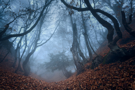 mystery: Autumn forest in the Crimea