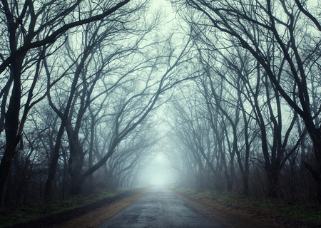 Mysterious autumn forest in fog. Autumn morning in Crimea (Mountain Ai-Petry) Stock Photo