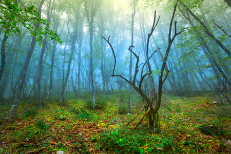 Mysterious spring forest in fog. Morning in Crimea