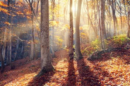 クリミア自治共和国の森の秋の夕日 写真素材