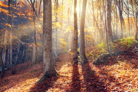 Beautiful autumn sunset in the forest in Crimea