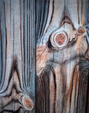 arbol de pino: textura de madera vieja. paneles de fondo para el dise�o Foto de archivo