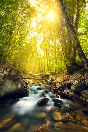 Sunset in the beautiful forest. Mountain river. Summer landscape in Crimea 免版税图像