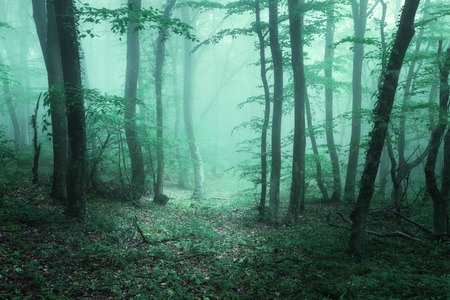 Trail through a mysterious dark forest in fog with green leaves. Spring morning in Crimea. Magical atmosphere. Fairytale 免版税图像
