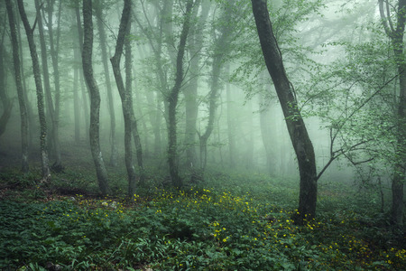 Trail through a mysterious dark forest in fog with green leaves and yellow flowers. Spring morning in Crimea. Magical atmosphere. Fairytale Standard-Bild