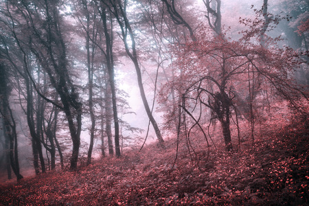 fog foggy: Mysterious forest in fog with pink leaves and red flowers. Spring morning in Crimea. Magical atmosphere. Fairytale Stock Photo