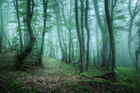 Trail through a mysterious dark forest in fog with green leaves. Spring morning in Crimea. Magical atmosphere. Fairytale Stock Photo