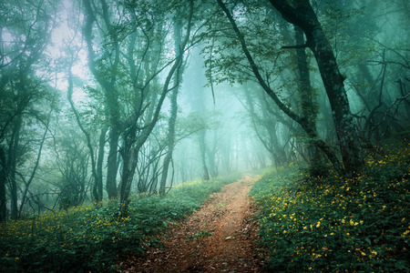 Road through a mysterious dark forest in fog with green leaves and yellow flowers. Spring morning in Crimea. Magical atmosphere. Fairytale