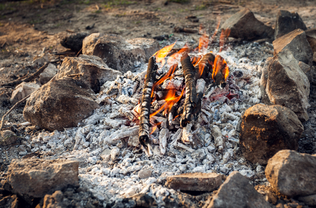 Bonfire in the spring forest. Coals of fire. Ukraine photo