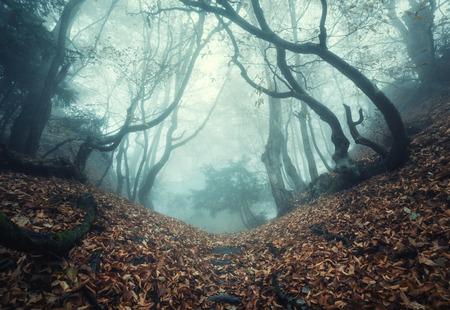 magico: Sendero a trav�s de un bosque misterioso viejo oscuro en la niebla. Ma�ana de oto�o en Crimea. Ambiente m�gico. Cuento De Hadas