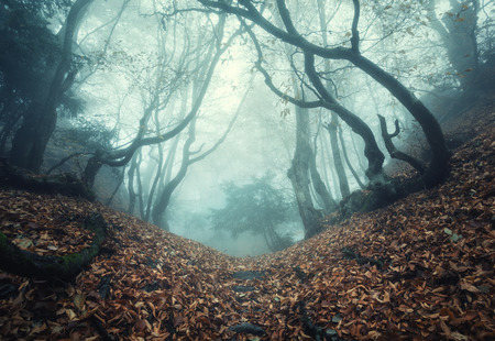 woods: Trail through a mysterious dark old forest in fog. Autumn morning in Crimea. Magical atmosphere. Fairytale Stock Photo