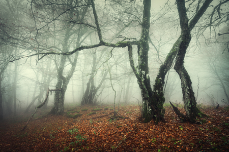 Trail through a mysterious dark old forest in fog. Autumn morning in Crimea. Magical atmosphere. Fairytale Foto de archivo