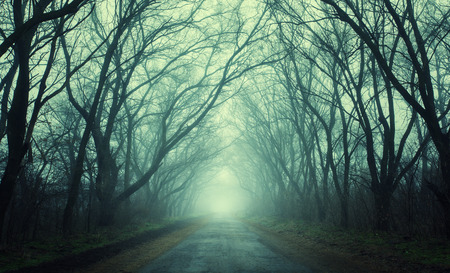 Mysterious dark autumn forest in green fog with road, trees and branches . Morning in Crimea 免版税图像