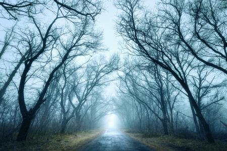 Mysterieuze donkere herfst bos in groene mist met de weg, bomen en takken. S ochtends in de Krim Stockfoto
