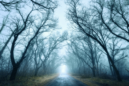 woods: Mysterious dark autumn forest in green fog with road, trees and branches . Morning in Crimea Stock Photo