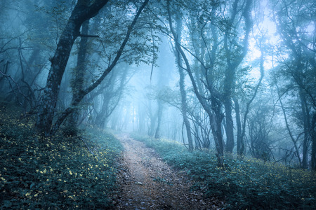 Trail through a mysterious dark forest in fog with green leaves and flowers. Spring morning in Crimea. Magical atmosphere. Fairytale