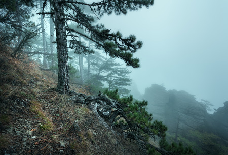 Trail through a mysterious dark old forest in fog. Autumn morning in Crimea. Magical atmosphere. Fairytale 免版税图像