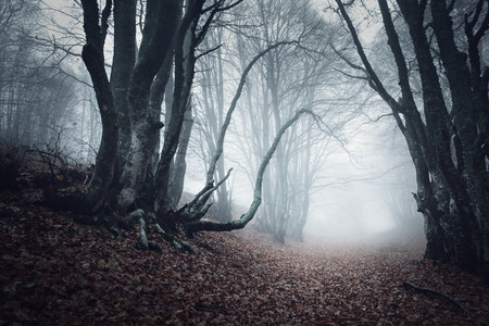 Trail through a mysterious dark old forest in fog. Autumn morning in Crimea. Magical atmosphere. Fairytale 스톡 콘텐츠
