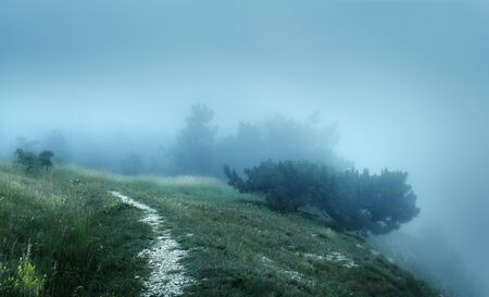 Path through a mysterious dark old forest in fog on the top of the mountain. Summer morning in Crimea. Magical atmosphere. Fairytale