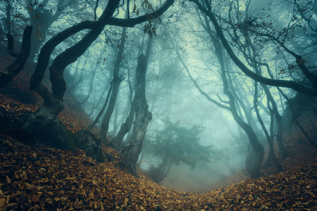 Trail through a mysterious dark old forest in fog. Autumn morning in Crimea. Magical atmosphere. Fairytale Stok Fotoğraf