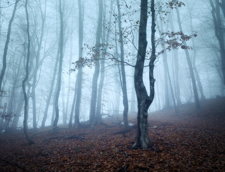 vintage leaf: Trail through a mysterious dark old forest in fog. Autumn morning in Crimea. Magical atmosphere. Fairytale Stock Photo
