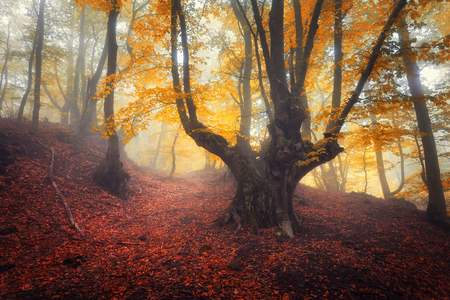 dark landscape: Trail through a mysterious dark old forest in fog. Autumn morning in Crimea. Magical atmosphere. Fairytale Stock Photo