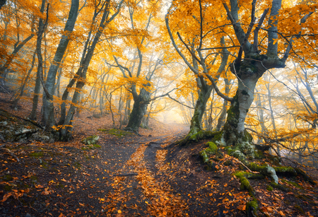 leaves green: Mysterious dark old forest in fog. Autumn morning in Crimea. Magical atmosphere. Fairytale Stock Photo