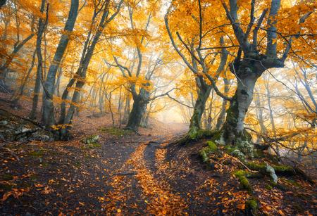 Mysterious dark old forest in fog. Autumn morning in Crimea. Magical atmosphere. Fairytale 免版税图像