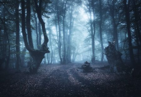 Mysterious dark old forest in fog. Autumn morning in Crimea. Magical atmosphere. Beautiful natural landscape. Stock Photo