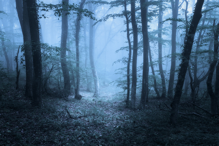 Mysterious dark old forest in fog. Spring morning in Crimea. Magical atmosphere. Beautiful natural landscape. Vintage style 스톡 콘텐츠